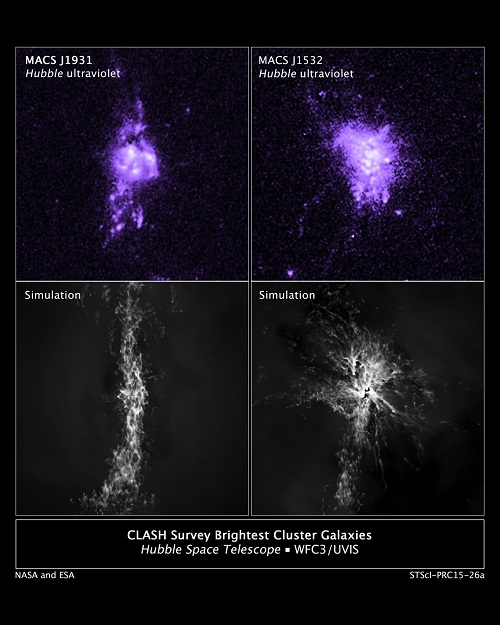 CAPTION Top: Actual Hubble observations of gas density in the central portion of two galaxies. Bottom: Computer simulations of knots of star formation in the two galaxies show how gas falling into a galaxy's center is controlled by jets from the central black hole. CREDIT Credits: NASA/ESA/M. Donahue/Y. Li