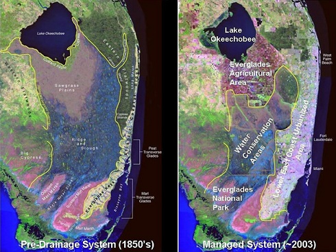 The image at left is a computerized simulation of how the Florida Everglades area looked circa the 1850s, before the sheet-water flow was interrupted by man-made canals in order to keep the land dry for human development. Since then, the entire ecosystem has changed for the worse (right), as runoff containing pesticides/fertilizers/toxins was flushed into Florida Bay. Image courtesy of South Florida Water Management District (SFWMD)